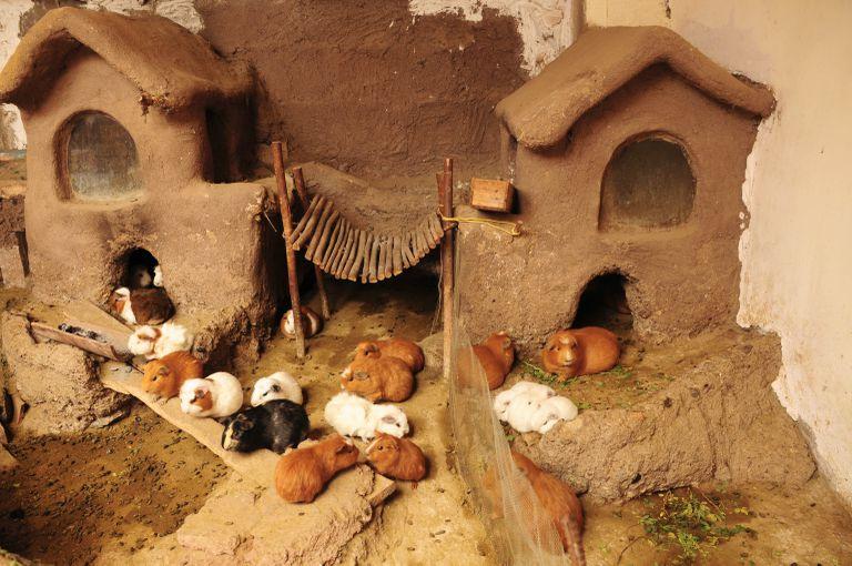 guinea-pig-house--peru-140876650-5b79a070c9e77c00508c5236
